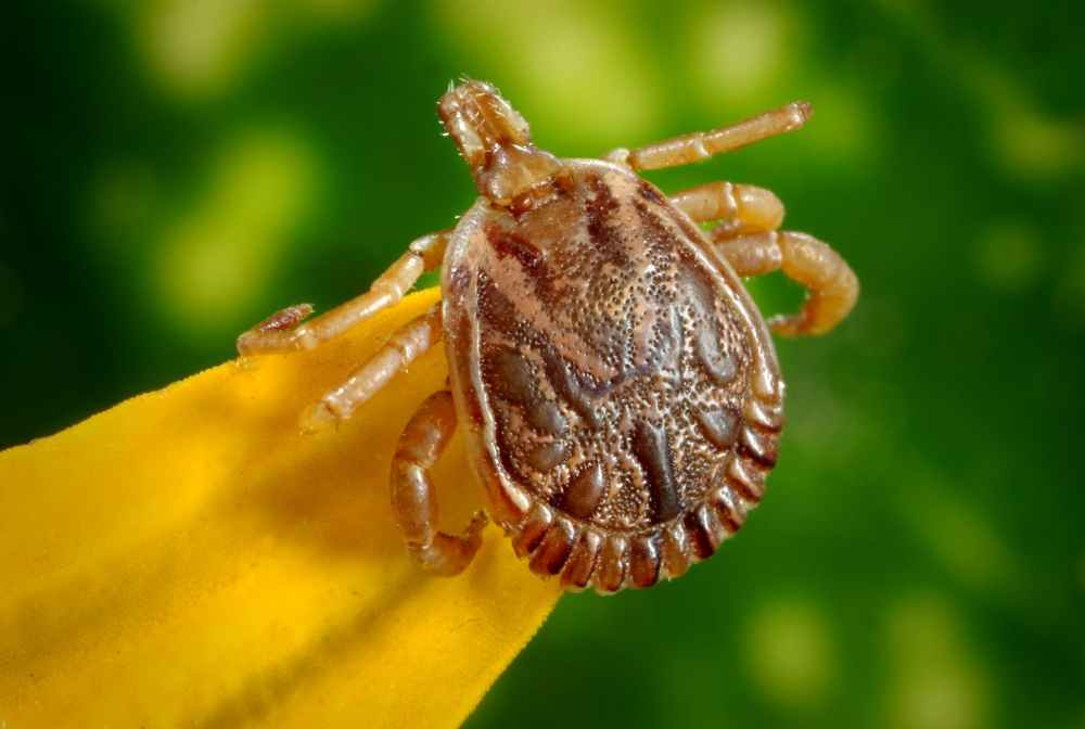 male bugs illness disease